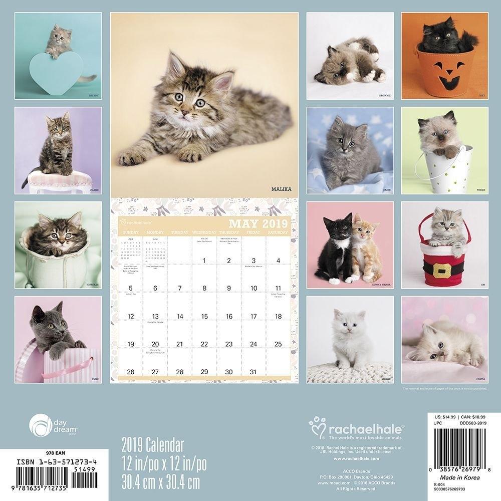 2019 Hale Cats 2019 Wall Calendar, Assorted Catsacco Brands Calendar 2019 Cats