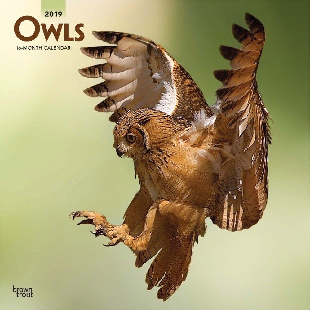 Owls 2019 12 X 12 Inch Monthly Square Wall Calendar, Wildlife Calendar 2019 Birds