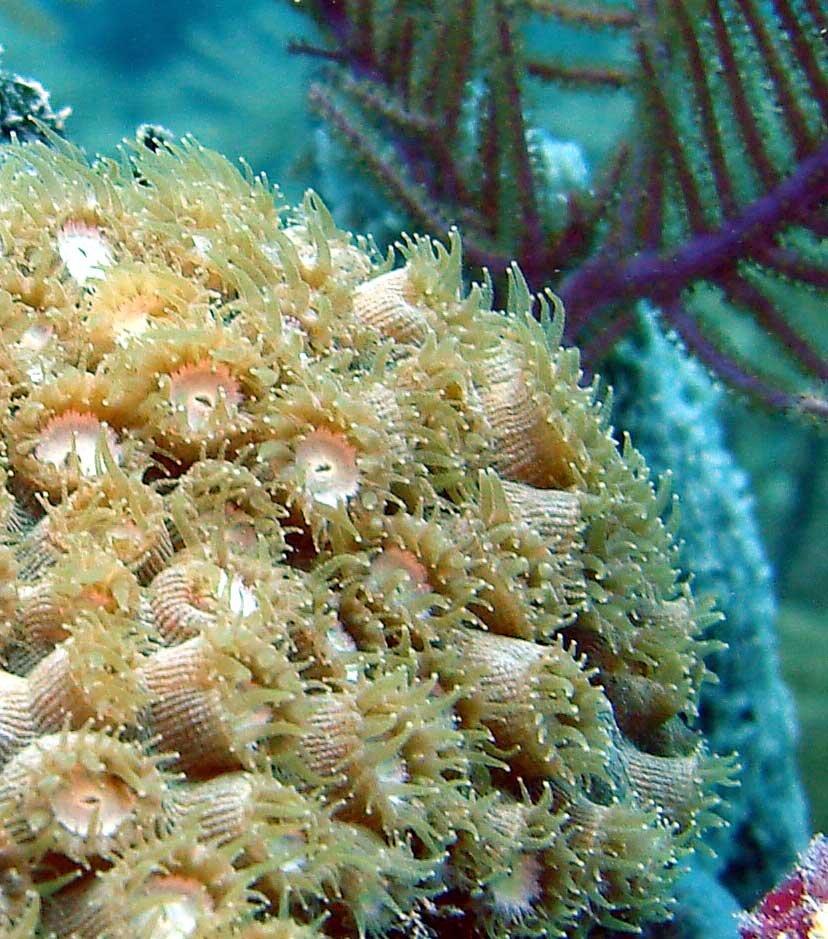 Coral Reefs – Biscayne National Park (U.s. National Park Hawaiian Fishing And Planting Calendar