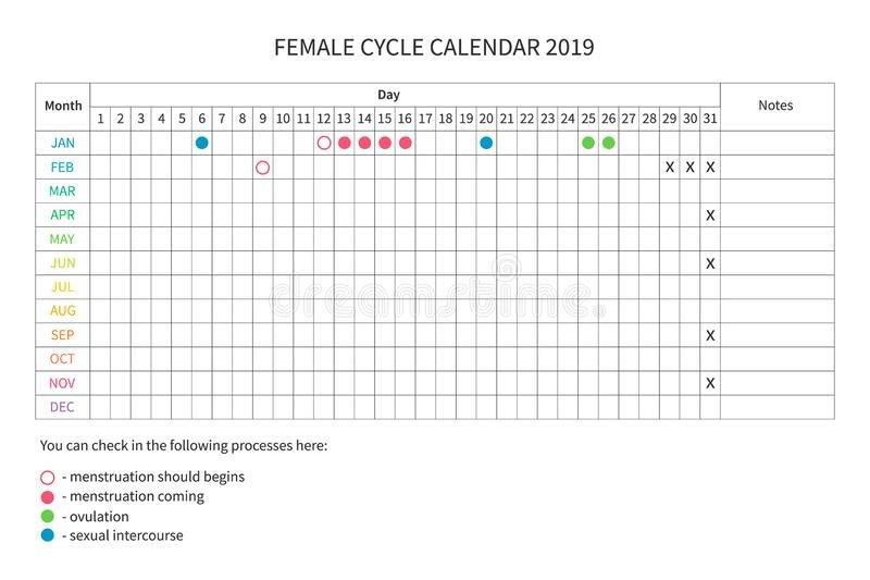 Female Menstrual Cycle Stock Illustrations – 1,038 Female Menstrual Cycle Calendar Template
