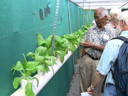 Aquaponics Grows 'Green' Agriculture | Honolulu Star Hawaiian Calendar Fishing And Planting