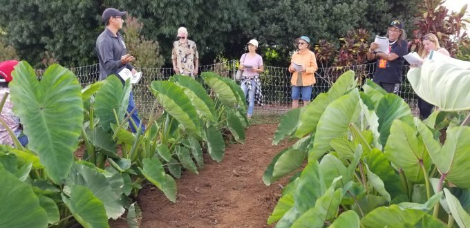 Commercial Crops – Get Local Hawaiian Calendar Fishing And Planting